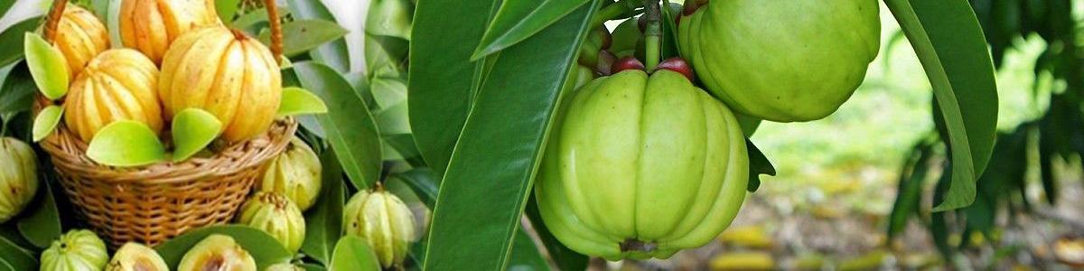 гарциния камбоджа хранителни добавки за отслабване